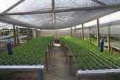 Hidroponia Fazenda Recanto da Lua Alimentos Orgânicos
