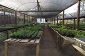 Hortinha Fazenda Recanto da Lua Alimentos Orgânicos